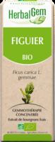 Herbalgem Figuier Macerat Mere Concentre Bio 30 Ml à JOUE-LES-TOURS